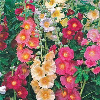 Springhill Nurseries